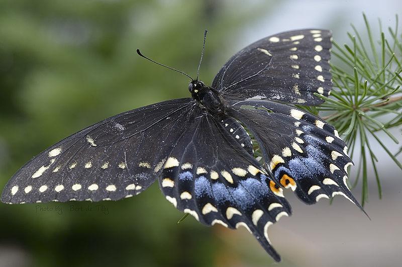 Mehr Schmetterlinge Im Garten ? Mit Den Richtigen Pflanzen Kein ... Blumen Schmetterlinge Im Garten