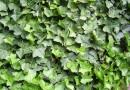 Hecken: Sichtschutz im Garten