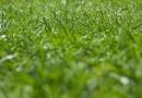 Rasen vertikutieren: Wann und wie?