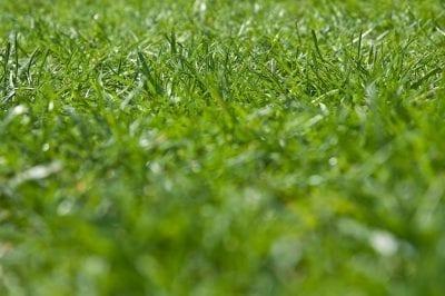 rasen garten grün daspaddy