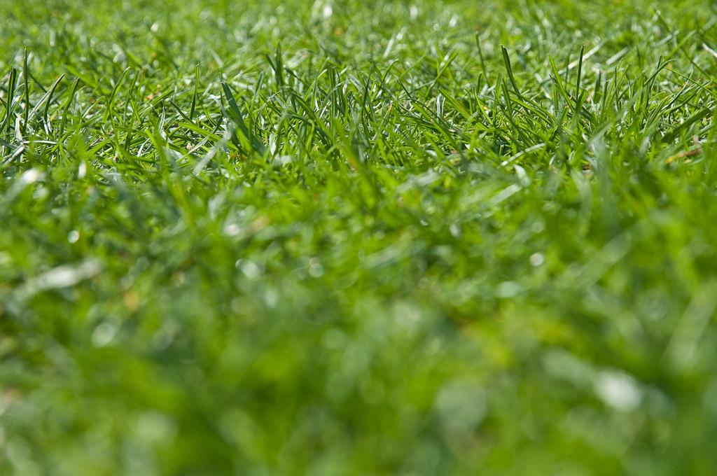 Rasen Vertikutieren Wann Und Wie Schweiz Tipps