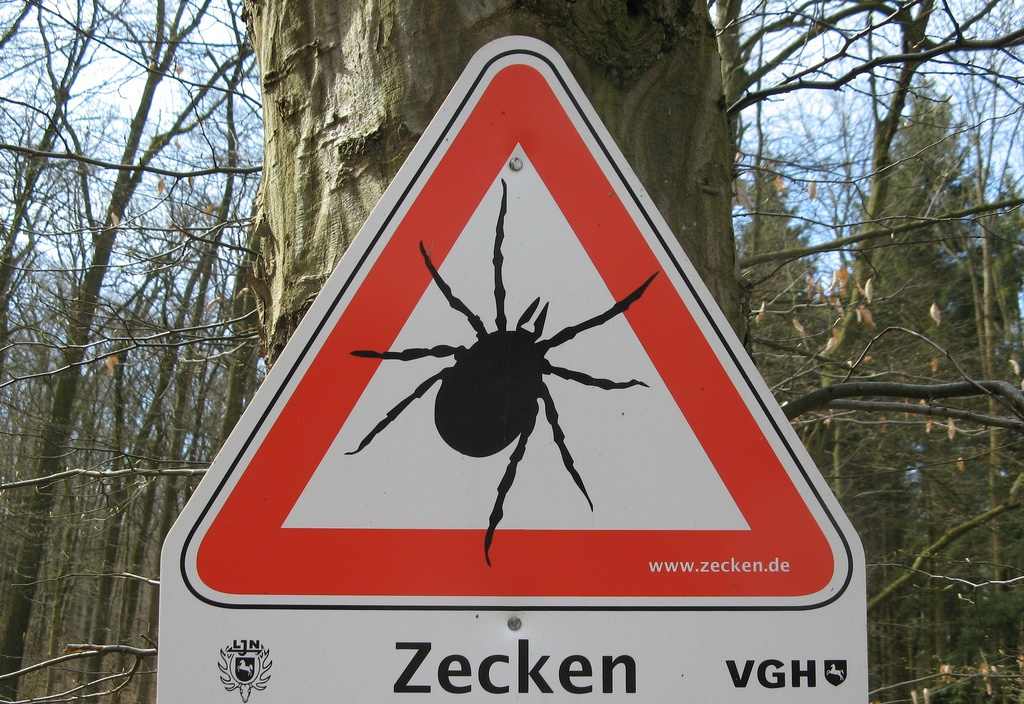Zecken, FSME, Gefahr