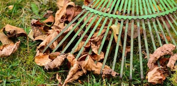 Garten winterfest machen – aber wie?