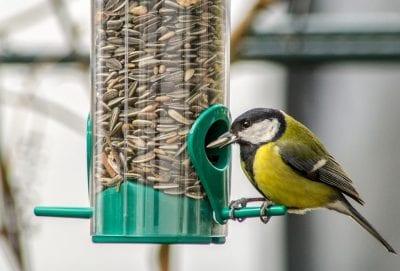 Vogel füttern