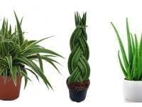 7 Zimmerpflanzen zur Luftverbesserung im Schlafzimmer - Mehr Sauerstoff & bessere Luftfeuchtigkeit
