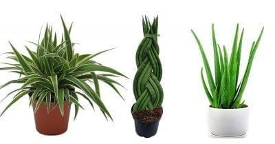 Zimmerpflanzen zur Luftverbesserung im Schlafzimmer - 7 Pflanzen für bessere Raumluft, mehr Sauerstoff und bessere Luftfeuchtigkeit