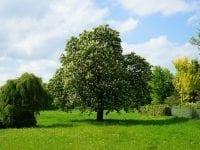 grundstück mit bäumen