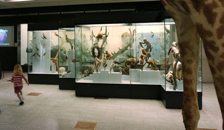 zoologisches-museum-zuerich-ausstellung