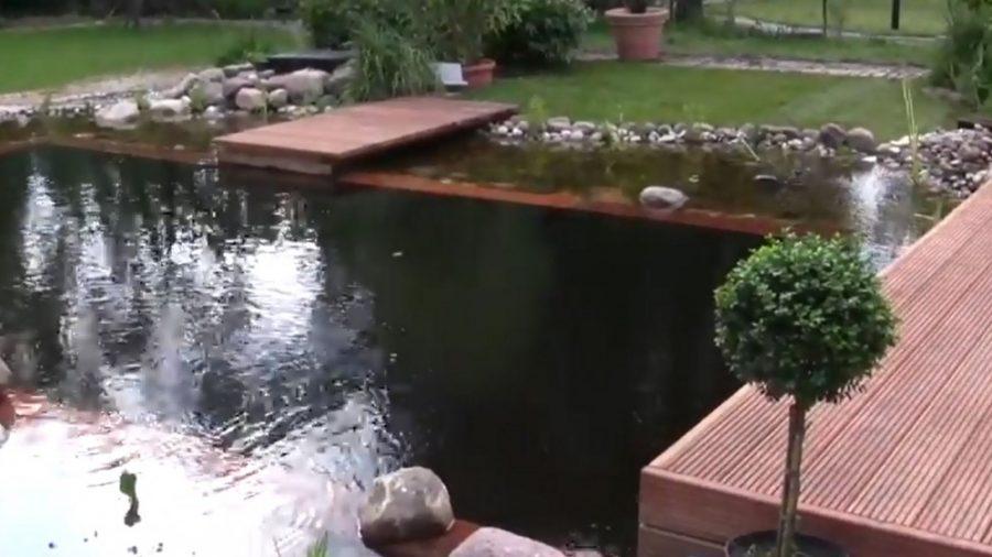 schwimmteich algen